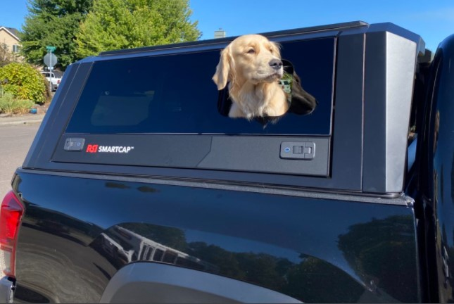 Canopy lifting window for dog