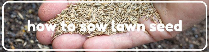 4 how to sow lawn seed.jpg
