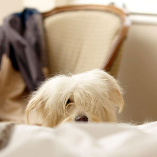 Pet stains and accidents on carpet