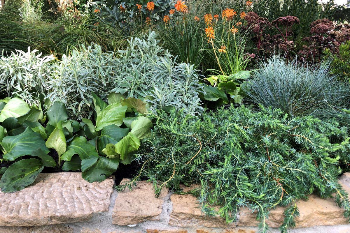 Plant What Where Aussie Mediterranean Warners Nurseries
